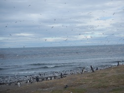 Hundreds of birds on Isla Magdalena